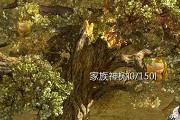 征途2手游神树丰收是什么? 征途2手游家族神树丰收机制介绍