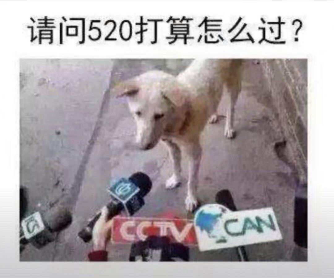 抖音請問250打算怎么過狗狗采訪圖