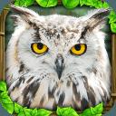 野生猫头鹰模拟器