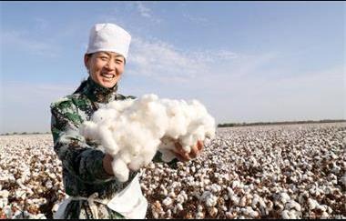 新疆摘棉花是什么梗